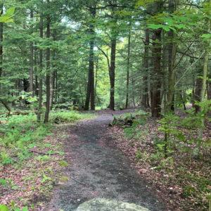 Solitude Farmz forest
